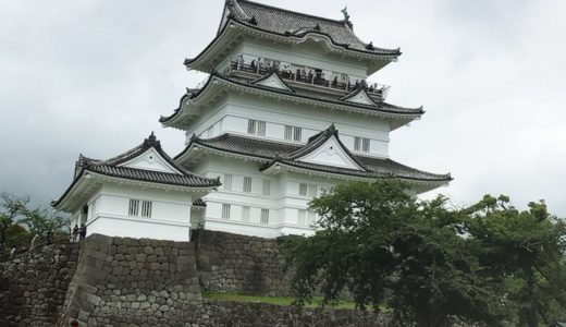小田原城であじさいと花菖蒲見てきました!